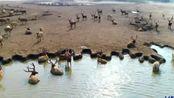 江苏之旅:鸟瞰中国麋鹿之乡大丰麋鹿国家自然保护区