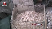 [安徽新闻联播]巢湖迎来秋季虾汛