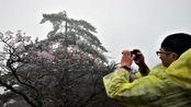 安徽:黄山迎今冬首场雾凇景观 引来无数游人纷纷赞叹