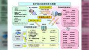 日本医保全解析:一文读懂医保就医的流程、费用