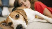 为什么狗狗不会染上艾滋病?是体内的抗体发生作用?看完不敢相信