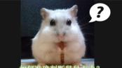 【仓鼠】养鼠须知!如何准确判断鼠鼠上火?(五年养鼠经验分享~)