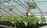 [吉林新闻联播]通化市与省农科院签署战略合作协议