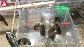 大叔制作了款捕鼠器,老鼠有多少都不够抓,能申请专利了