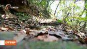 普洱市首个国家级自然保护区巡回检察室成立