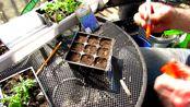 如何以及何时开始播种薰衣草种---小花园网www.xiaohuayuan.net