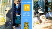 【大熊猫金虎飞云】今日宜宠粉 天凉了 秋裤你爱黑色还是白色?