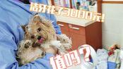 本来只是带狗子去洁牙,结果却拔了六颗牙!宠物口腔健康真的很重要!