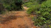 午后的林间小路