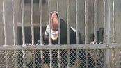 黑熊求投喂,ei,那个人,你投准点得行不,我嘴巴张软了