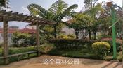 第一次来云南文山市盘龙森林公园这里旁边有很多小别墅风景也很好