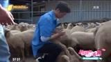 田亮体验羊群中抓羊,发现羊嘴里有菜叶,竟想帮它剃个牙