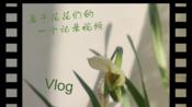 属于一盆花花的Vlog 11(完结篇)~~~(●ω●)~