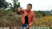 四川自贡:看农村小伙上山挖啥东西??你们有谁吃过??