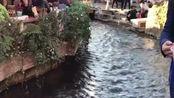 云南丽江古城溪水潺潺,来过一遍就不想走了,真的好美啊!
