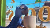 里约大冒险:布鲁鹦鹉正在喝咖啡,不料被两只大鸟嘲笑!