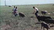 黑龙江记忆:1976年的大庆,油田职工生活,杀猪包饺子
