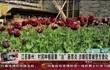 """江苏泰州:村民种植罂粟""""治""""肠胃炎 涉嫌犯罪被警方查处"""