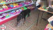 广东梅州发现一条聪明狗,居然可以使唤干活,真是听话!