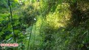 蛇类科普蛇哥直播录像2019-09-25 14时0分--19时6分 跨省第二天,继续追梦中国最大的 蝰蛇