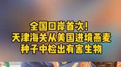 全国口岸首次!天津海关从美国进境燕麦种子中检出豚草