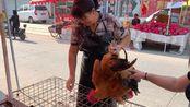 山东临沂农村大集,公鸡涨到多少钱一斤了呢?听宰鸡大姐咋说的