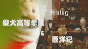 顾凛|广州一日vlog|西洋记+高等柴犬学院|保姆级攻略|内涵环境拍摄建议|又是参观古董和撸狗的美好一天|探店