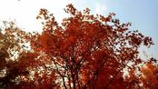 骑行-辽阳灯塔看红叶
