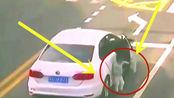 女司机亲手给儿子打开了死亡之门,丈夫回看监控暴跳如雷