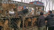 石家庄赵陵铺百年大集,应该是河北省最大的露天市场了吧!