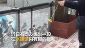 """男子水族馆展示高超""""球技"""" 企鹅宝宝跟着魔性摇摆"""