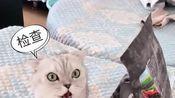 每天都要接受猫咪的检查,猫咪要不是太皇太后在后面你死定了!