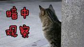 【流浪小奶猫】找到地方定居了,很凶很萌,胆子很大赶别的猫走。