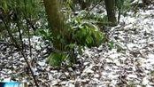 屏山老君山迎来今冬第一场大雪