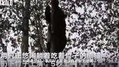 四川绵阳4.6级地震时大熊猫五秒上树,网友:求生欲太强