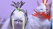 【花舞剑】2020-01-07(七点以前猫猫代打非本人的录屏)