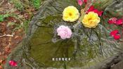 晓韵田园:这个DIY的流水微景观,让花园增添了不少灵气