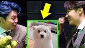 Jimin改了名字,RM和他的狗团聚了