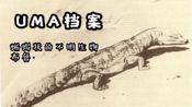 【UMA未知生物档案】蜥蜴状的不明生物.布鲁