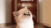 当猫咪不小心受伤以后,主人应该做些什么?它的伤口可以自愈吗?-搞笑-高清完整正版视频在线观看-优酷