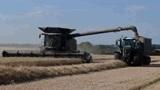 麦塞弗格森 Ideal 9搭配芬特收割小麦