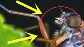 多少只蚊子可以一次性吸光人的血液?看完汗毛竖起