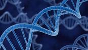 基因剪刀技术?克服医学难题,未来可能会出现完美婴儿?