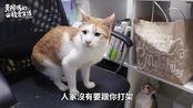 【黄阿玛的后宫生活】小猫受训中!四小虎日常EP.5