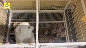 物业抗疫禁止居民养宠物否则捕杀,公安:已责令改正