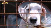 探访福州市小榕树流浪动物救助中心(三)基地目前运营的情况如何,义工又有什么话要说关爱流浪狗 流浪动物