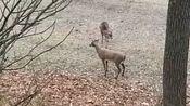 小鹿:快跑,我杀人了,啊,不对我杀鹿了