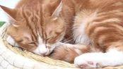 猫咪睡姿大揭密~来看看你家主子是哪种吧#萌宠