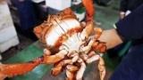 """日本人吃""""青蛙蟹"""",大厨一刀下去后,成品太惊艳了!"""