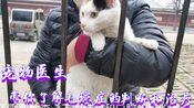 宠物医生带你了解:猫实例肠梗阻(毛球症)的诊断和治疗全过程